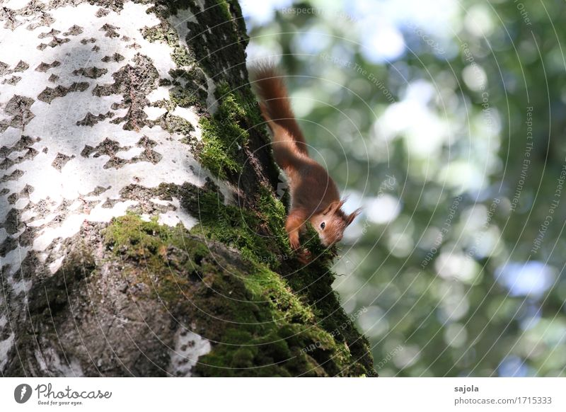 Nature Plant Summer Tree Animal Environment Natural Wild Wild animal Cute To hold on Climbing Collection Moss Accumulate Squirrel