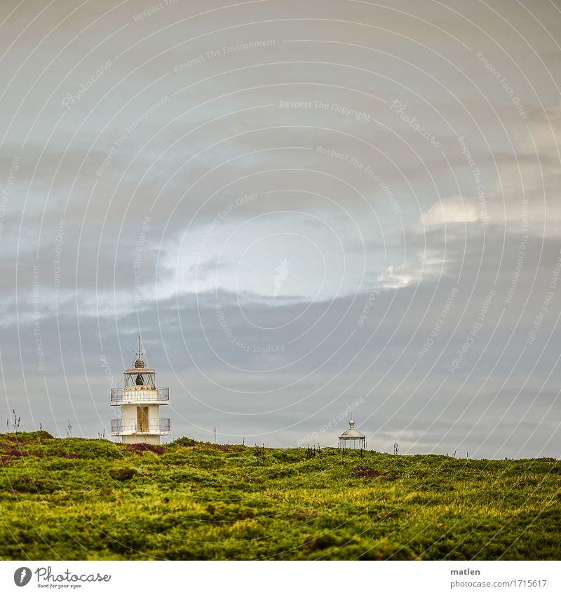 doubles Nature Landscape Plant Sky Clouds Summer Beautiful weather Grass Bushes Moss Coast Ocean Lighthouse Blue Brown Yellow Green Pink White Heathland 2