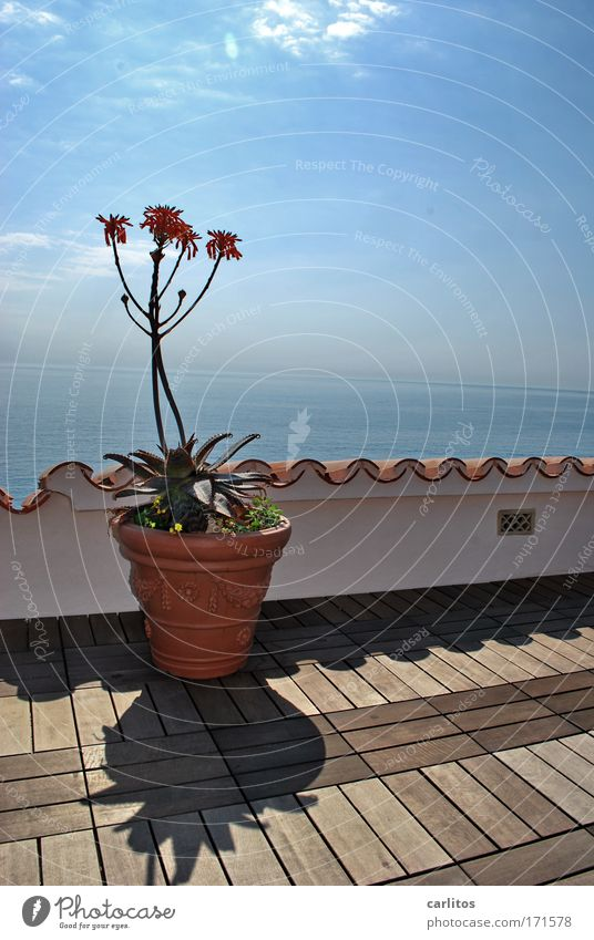 No flower pot to win ? Wide angle Luxury Relaxation Calm Vacation & Travel Summer vacation Sunbathing Dream house Beautiful weather Plant Pot plant Ocean Island