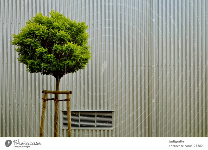 city greening Colour photo Subdued colour Exterior shot Deserted Day Tree Town Building Facade Growth Round Green