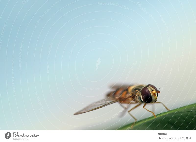 Nature Relaxation Leaf Environment Small Design Dream Contentment Elegant Wild animal Fly Sit Communicate Wait Energy Wing