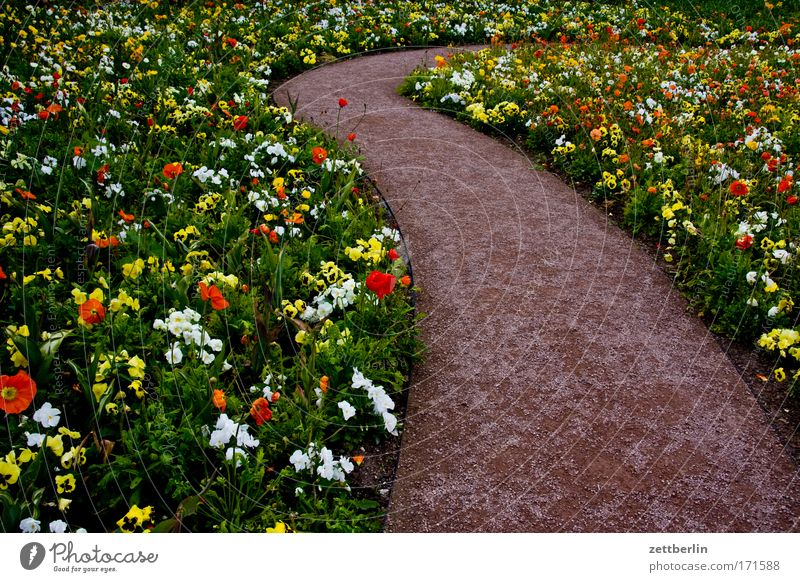flowers Flower Garden Horticulture Green Plant Garden Bed (Horticulture) Flowerbed Blossoming Lanes & trails Winding road Bend Curve Turn off Detour Garden plot
