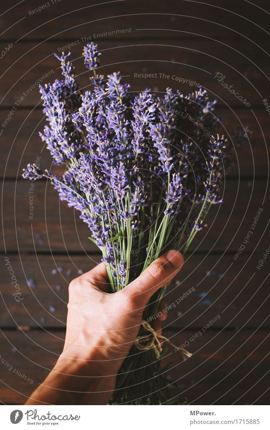 lavender Lavender Violet Bouquet Ground Bundle Flower Plant Cooking oil Odor Fresh Healthy Health care Cut Decoration Hand To hold on Wood Wooden table Brown