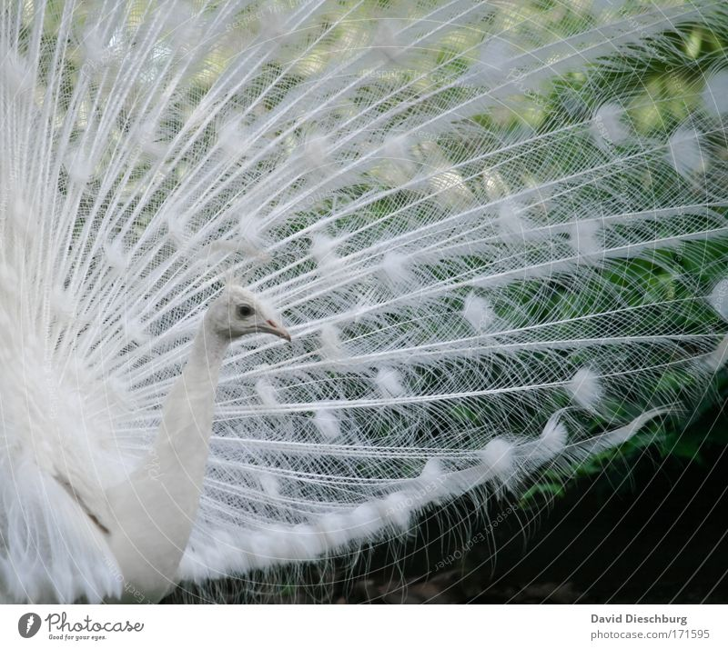 Proud and beautiful Colour photo Exterior shot Detail Structures and shapes Day Contrast Animal portrait Profile Nature Wild animal Bird Animal face Zoo 1 White
