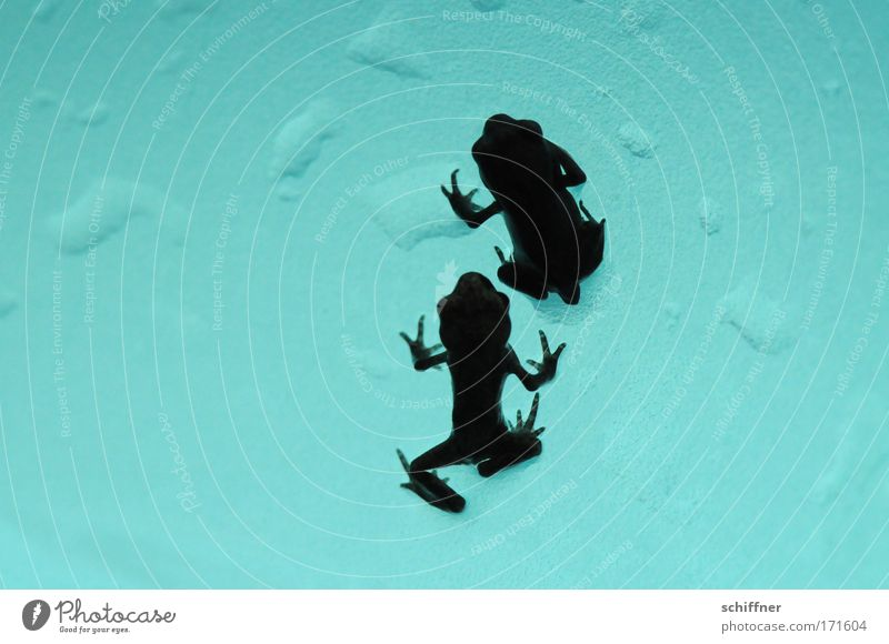Nature Water Legs Together Pair of animals Going Environment Drops of water Fingers In pairs Turquoise Frog Attachment Crawl Painted frog