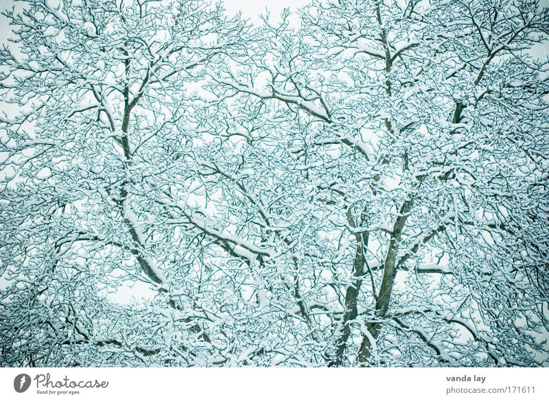 White Tree Plant Winter Calm Cold Snow Landscape Ice Abstract Environment Frost Branch Pattern December February