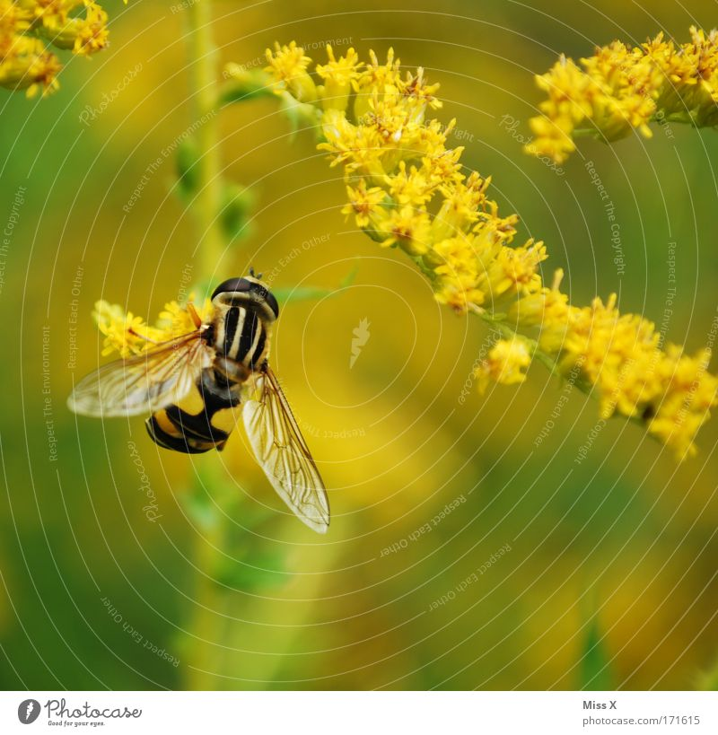 Nature Plant Animal Yellow Meadow Blossom Park Field Environment Flying Bushes Wing Insect Bee Colour