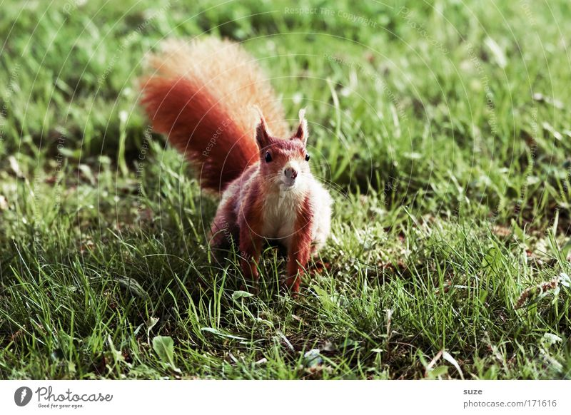 ... can do karate! Environment Nature Landscape Plant Animal Climate Grass Meadow Pelt Wild animal Squirrel Rodent 1 Brash Small Cute Green Red Curiosity