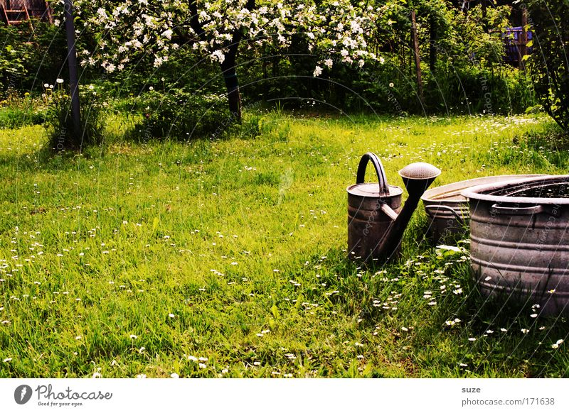 full can Garden Gardening Environment Nature Plant Beautiful weather Tree Grass Meadow Watering can Authentic Idyll Green Relaxation Blossoming Colour photo