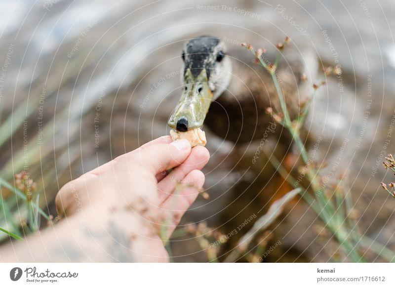 Human being Nature Plant Summer Water Hand Animal Coast Lake Bird Friendship Wild animal Fingers Cute Curiosity Lakeside