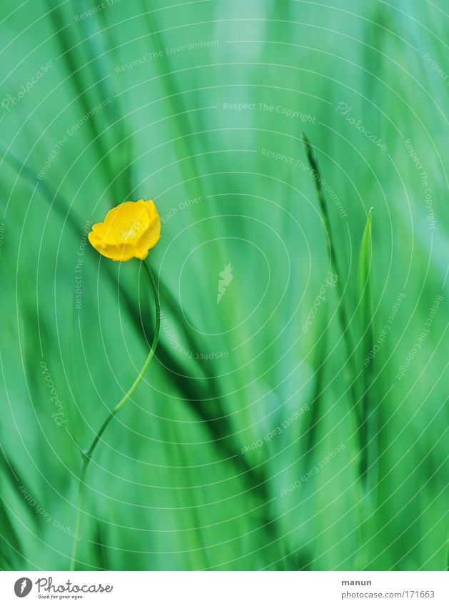 Green Summer Colour Calm Relaxation Environment Yellow Meadow Grass Spring Blossom Healthy Contentment Natural Design Growth