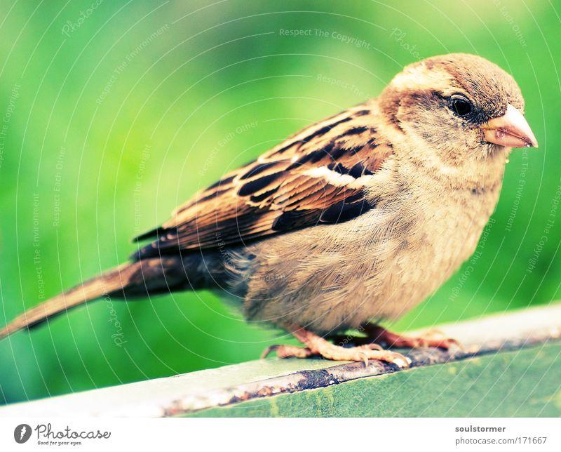 Green Beautiful Animal Freedom Small Brown Bird Sit Flying Wild animal Wing Joie de vivre (Vitality) Sparrow Love of animals Passerine bird