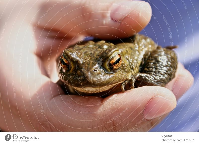 Human being Hand Green Animal Cold Small Glittering Wet Exceptional Fingers Safety Uniqueness Protection Trust Frog Relationship