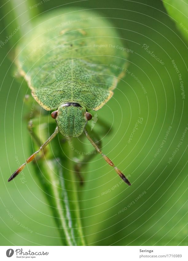 eye contact Plant Animal Spring Summer Grass Leaf Garden Park Meadow Forest Wild animal Beetle Animal face Wing 1 Crawl Nymph Bug Insect Colour photo