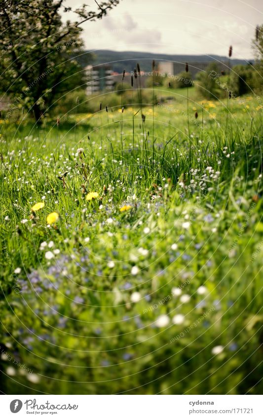 spring meadow Colour photo Exterior shot Close-up Detail Deserted Copy Space left Copy Space right Copy Space top Copy Space bottom Copy Space middle Day Shadow