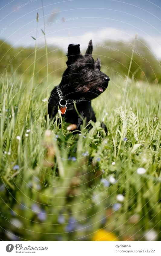 Dog Nature Beautiful Plant Flower Animal Environment Life Meadow Emotions Freedom Movement Grass Spring Happy Dream