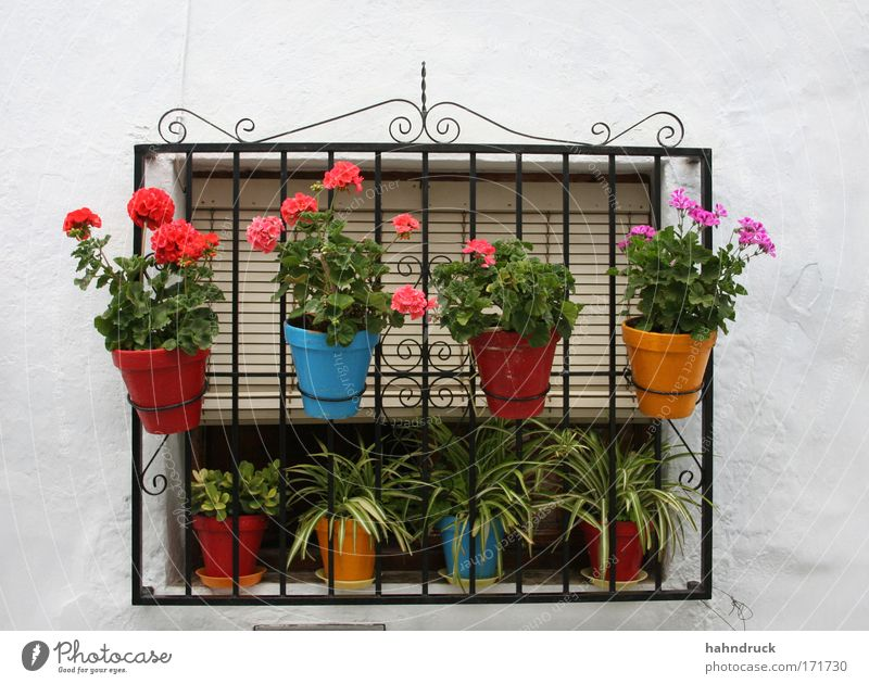 Andalusian window idyll Colour photo Detail Deserted Day Plant Flower Blossom Pot plant Garden Spain House (Residential Structure) Wall (barrier)