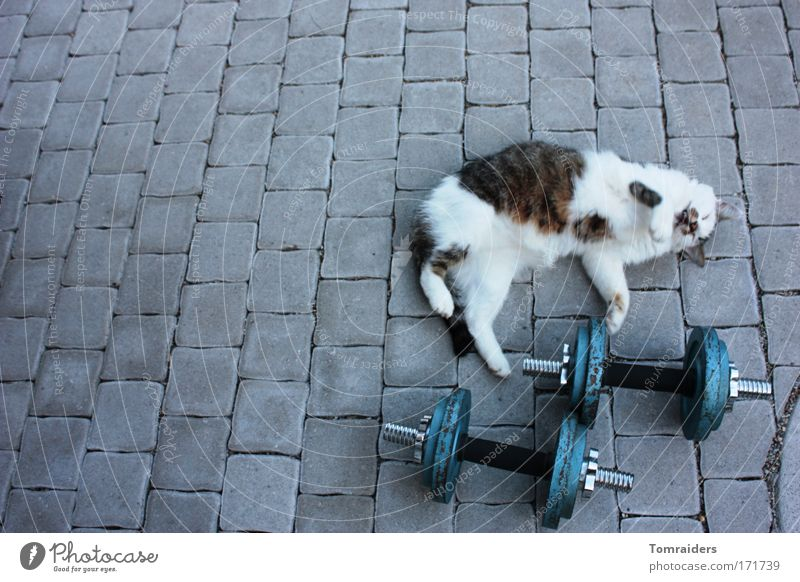 warm-up training Sportsperson Dumbbell Terrace Paving stone Animal Pet Cat 1 Stone Movement Lie Wait Muscular Love of animals Colour photo Exterior shot