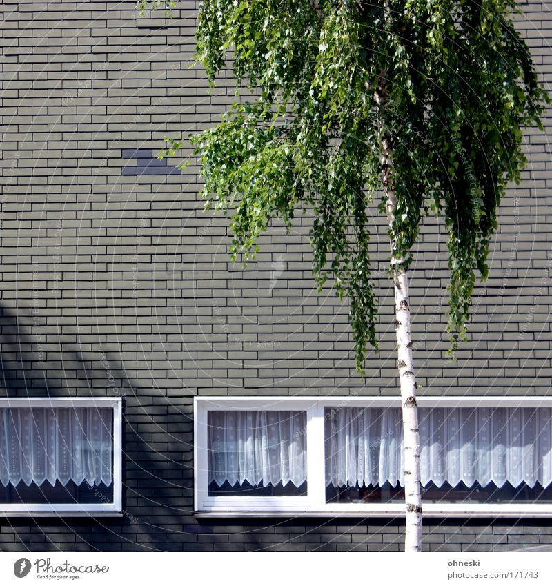 Palm Beach Bochum Subdued colour Exterior shot Copy Space left Shadow Contrast Sunlight Sunbeam Tree Leaf Birch tree Town House (Residential Structure)