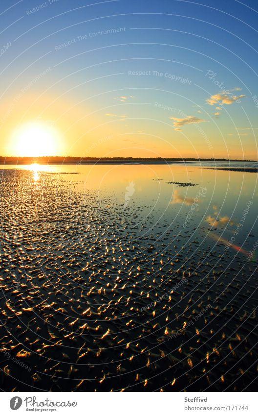 Nature Water Summer Beach Calm Sand Landscape Contentment Moody Coast Earth Warm-heartedness Serene Sunset Australia Wanderlust