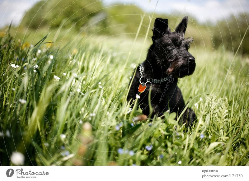 Dog Nature Beautiful Plant Flower Animal Environment Landscape Life Meadow Nutrition Freedom Movement Grass Spring Dream