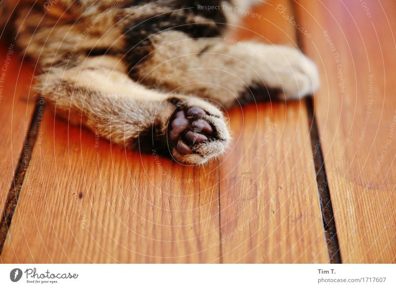 cat paws Animal Pet Cat 1 Considerate Domestic cat Paw Hallway Colour photo Interior shot Deserted Copy Space bottom Day