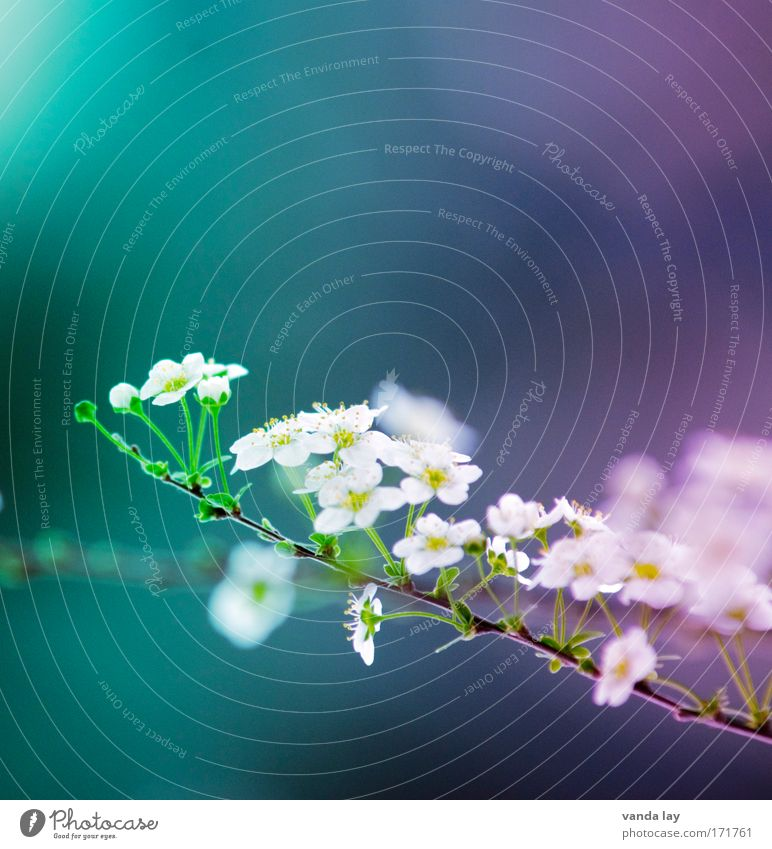 Flower Plant Summer Blossom Spring Small Esthetic Bushes Joie de vivre (Vitality) Blossoming Many Difference Cyan Innocent