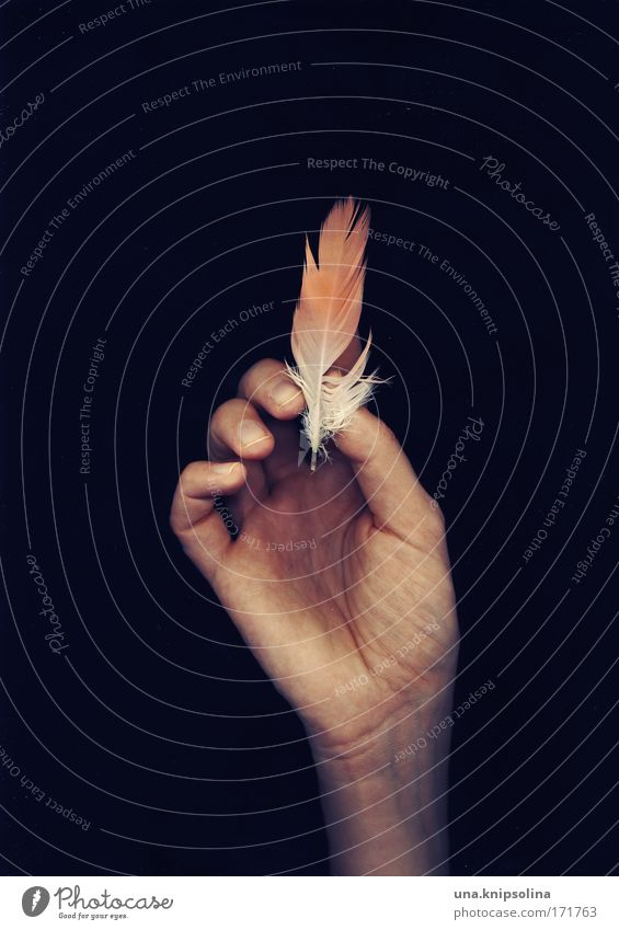 Human being Nature Hand Animal Environment Pink Flying Arm Skin Fingers Feather Soft Touch To hold on Delicate Easy