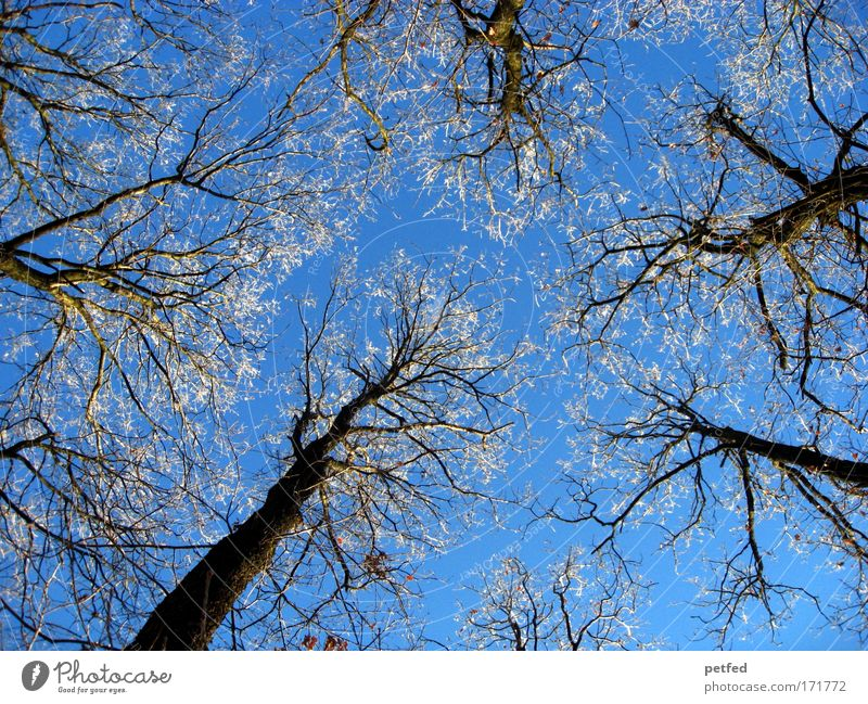 winter in summer Trip Winter Snow Cloudless sky Ice Frost Tree Forest Old Tall Cold Hard Colour photo Exterior shot Deserted Day Worm's-eye view Upward