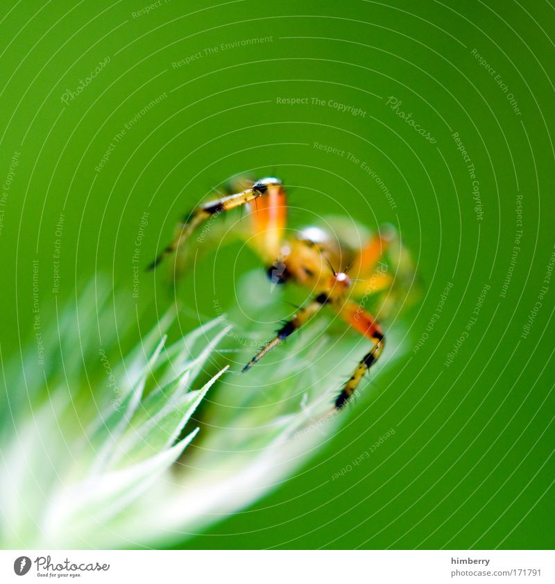 Nature Green Plant Animal Meadow Field Fear Environment Network Threat Exceptional Wild animal Exotic Fear of death Spider