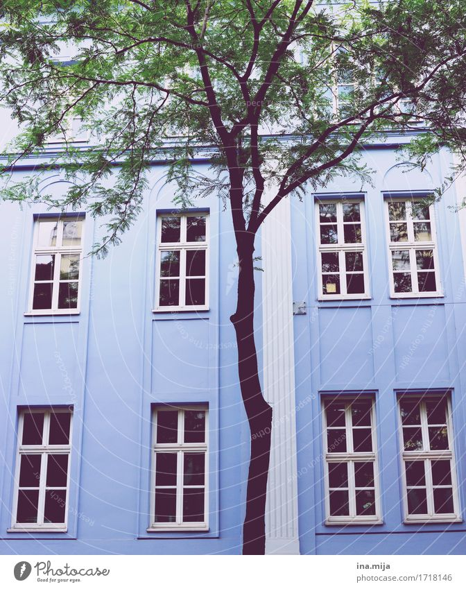 Vacation & Travel City Blue Colour Tree House (Residential Structure) Window Architecture Wall (building) Building Wall (barrier) Facade City life