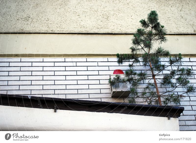 Nature White Tree City Red Lamp Freedom Sadness Hope Safety Growth Dangerous Wild Joie de vivre (Vitality) Tile Signage