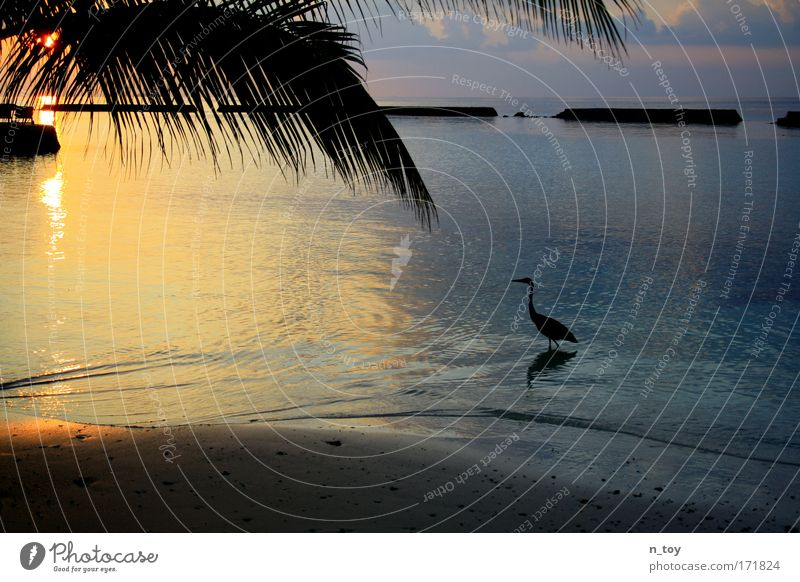 alone in a dream Colour photo Exterior shot Evening Twilight Light Shadow Contrast Sunlight Sunrise Sunset Vacation & Travel Tourism Far-off places Freedom