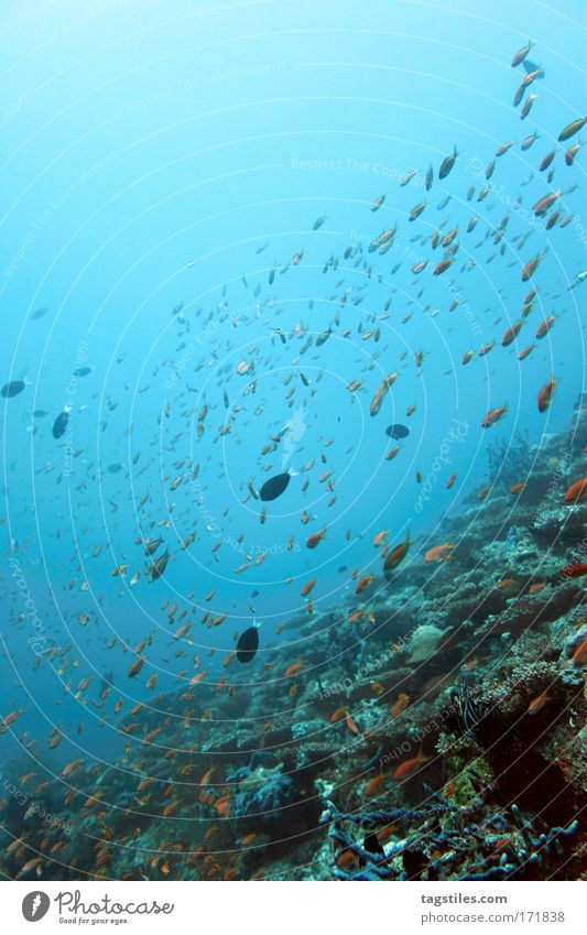 Ocean Vacation & Travel Calm Relaxation Freedom Underwater photo Fish Dive Idyll Discover India Maldives Paradise Reef Coral