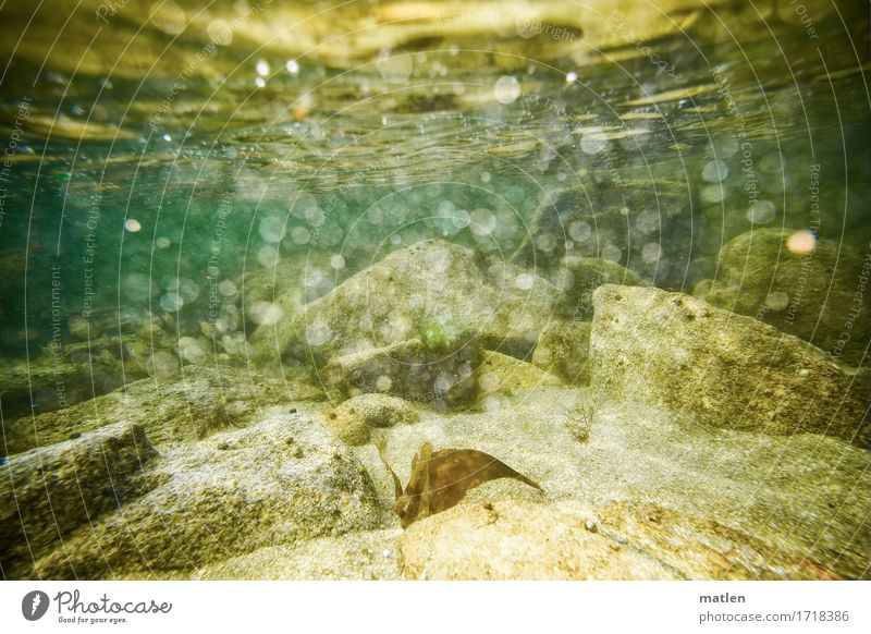 Submerged Environment Nature Landscape Water Summer Rock Ocean Natural Brown Yellow Gray Green Surf Bubbling Air bubble Colour photo Exterior shot