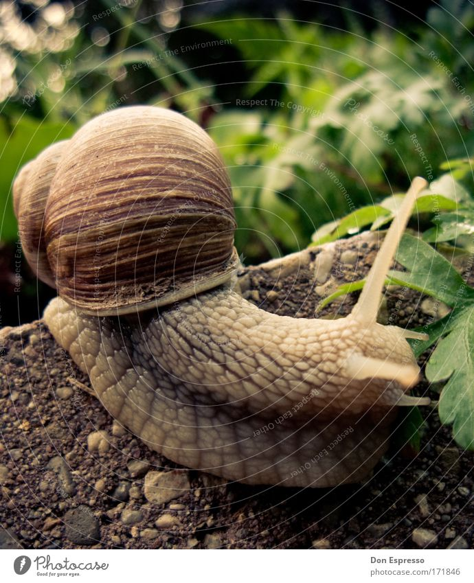 Downhill! Colour photo Exterior shot Detail Macro (Extreme close-up) Deserted Copy Space right Copy Space top Environment Nature Earth Plant Snail 1 Animal
