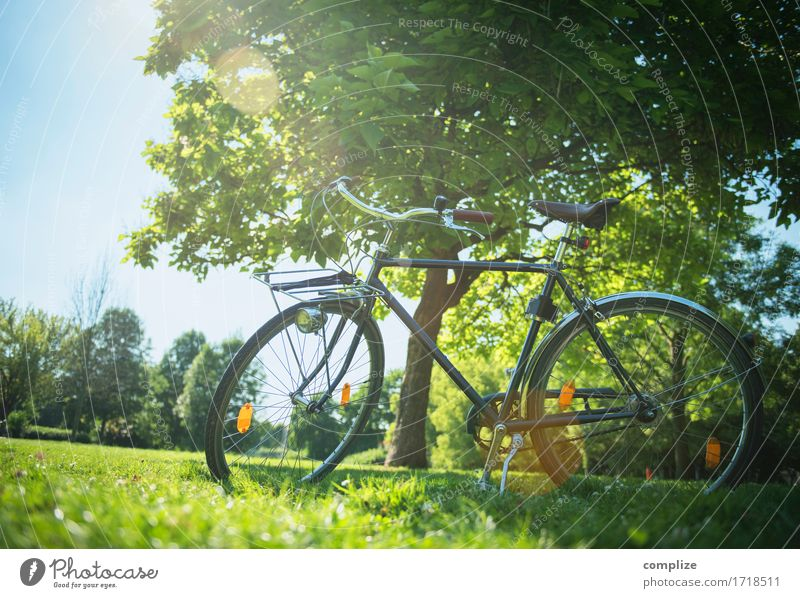 Bicycle romance Healthy Wellness Life Relaxation Calm Vacation & Travel Trip Freedom Summer Summer vacation Sun Cycling Environment Nature Climate Tree Bushes