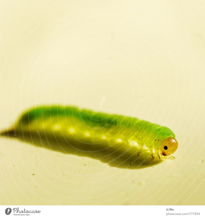 Nature Green Plant Animal Yellow Eyes Environment Landscape Small Wild animal Happiness Cute Animal face Environmental protection Patient Caterpillar