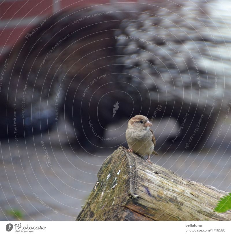 Sparrow with fine wood note on porcupine Animal Wild animal Bird Zoo 2 To feed Sit Brash Free Together Small Near Natural Cute Point Thorny Tree trunk