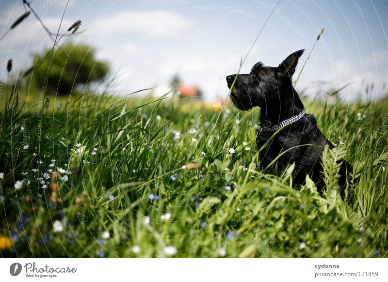 Dog Nature Beautiful Plant Flower Animal Relaxation Environment Landscape Life Meadow Freedom Movement Grass Spring Dream