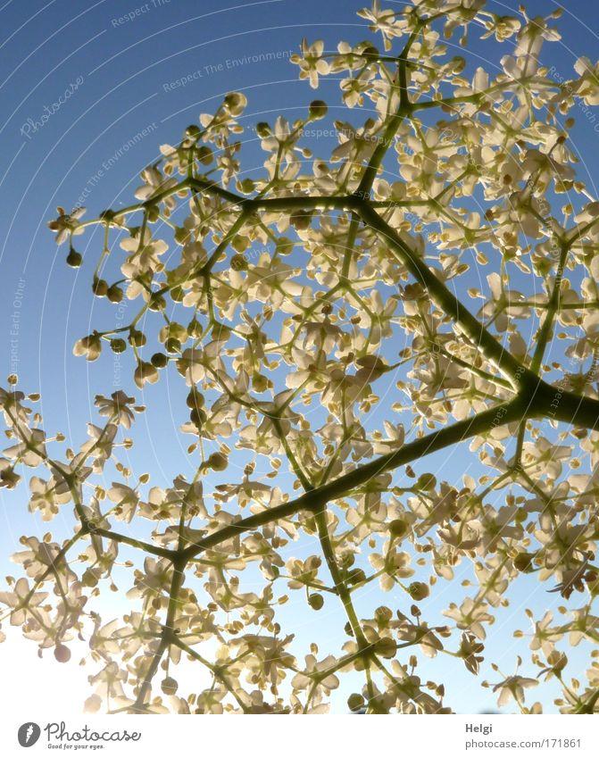 Sky Nature Blue White Plant Sun Environment Spring Blossom Natural Growth Fresh Esthetic Illuminate Bushes Beautiful weather