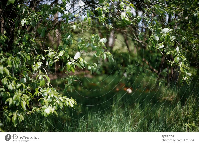 Nature Green Beautiful Tree Plant Leaf Calm Environment Meadow Life Emotions Movement Grass Freedom Sadness Dream