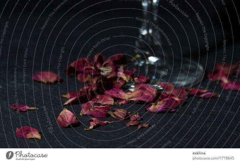Rosenblüten / Rose blossoms Drinking Alcoholic drinks Wine Sparkling wine Prosecco Champagne Elegant Style Senses Valentine's Day Flower Blossom Glass