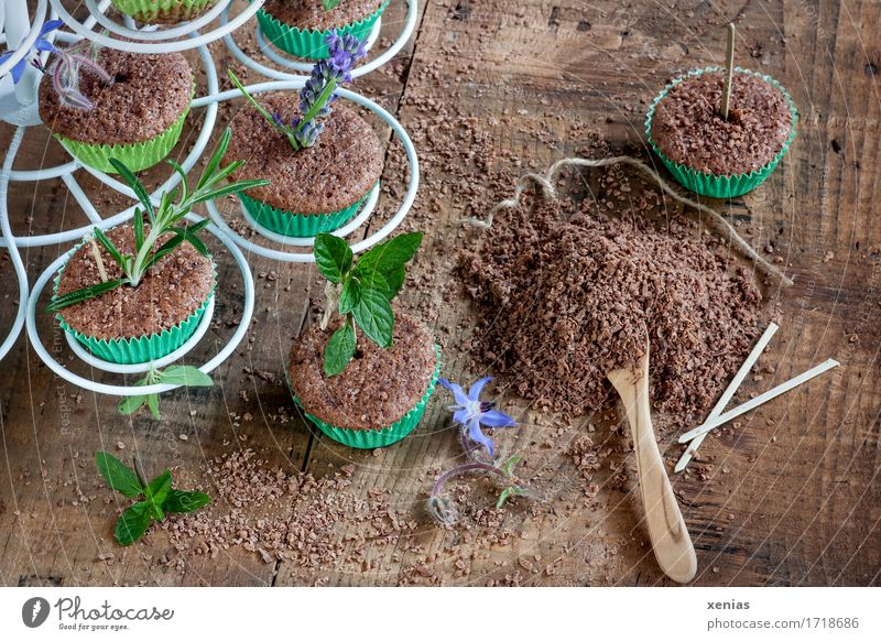 Cake with herbs in muffin cups as arranged in the nursery Chocolate cake Food Dough Baked goods Candy Herbs and spices Sugar To have a coffee Spoon Earth Plant