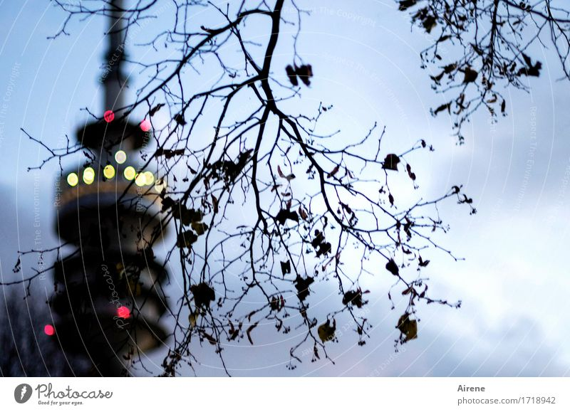 The tower Autumn Tree Twig Munich Olympic Park Olympic Tower Tourist Attraction Landmark Point Point of light Light Illuminate Dark Town Blue Yellow Red Black