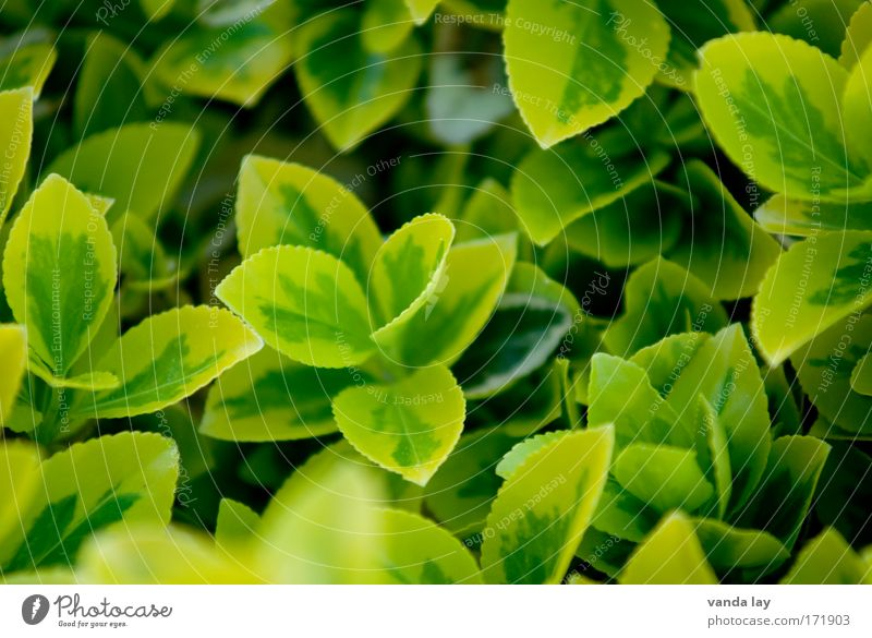 Nature Green Plant Yellow Environment Foliage plant