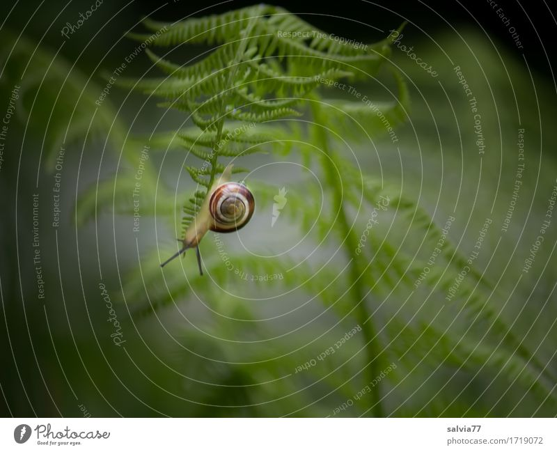 Nature Plant Green Leaf Animal Forest Lanes & trails Garden Gray Perspective Under Hang Downward Snail Crawl Fern