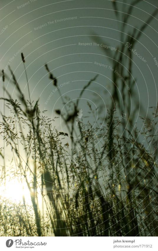 Beautiful Plant Sun Meadow Grass Warmth Happy Sadness Dream Park Together Contentment Lie Romance Joie de vivre (Vitality) Infatuation