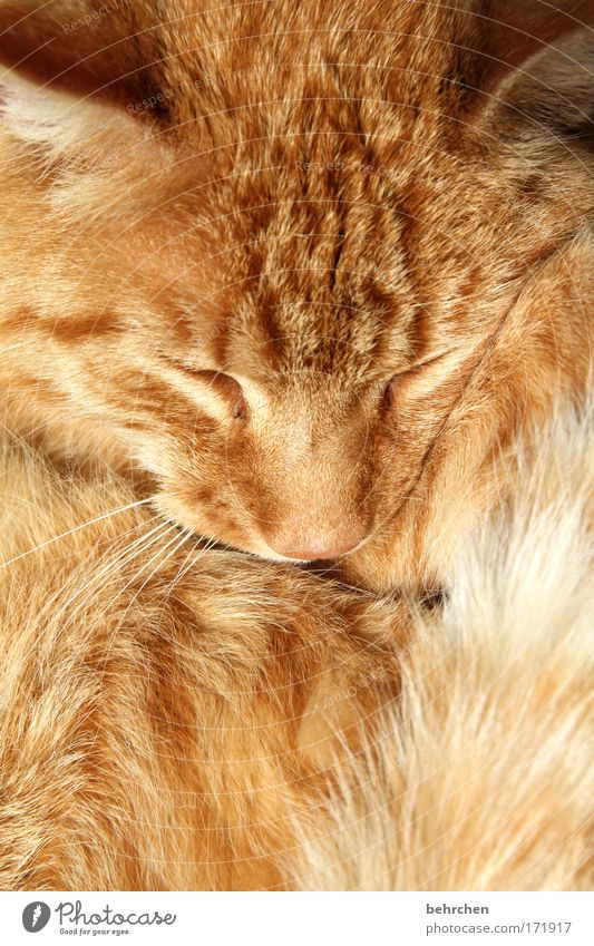 Eyes Happy Cat Contentment Orange Nose Safety Ear Soft Animal face Protection Trust Pelt Warm-heartedness Cute To enjoy