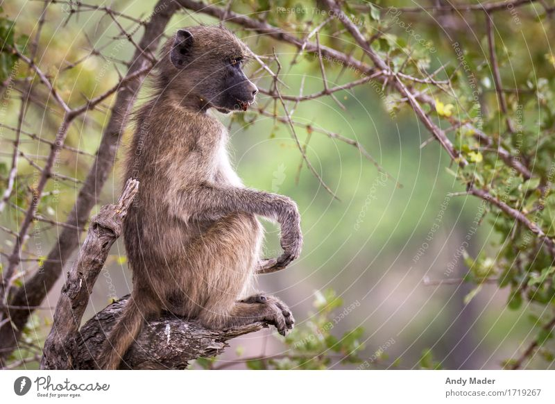 Nature Relaxation Animal Wild animal Sit To enjoy Observe Cool (slang) Monkeys